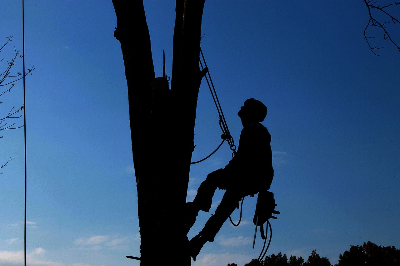 tree-care-services-irving