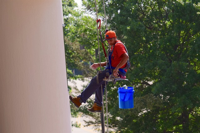 irving-tree-removal-experts