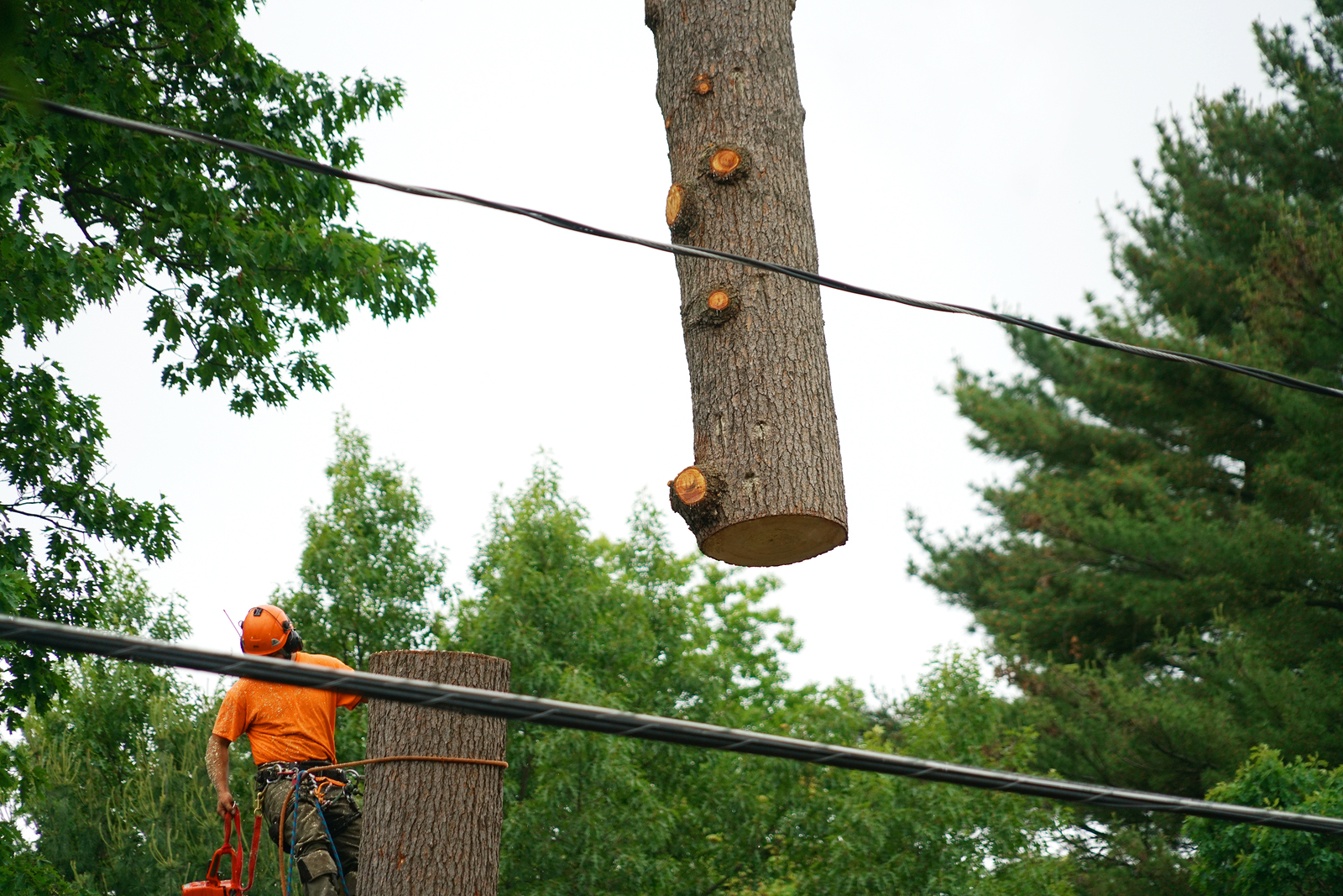 tree-removal-contractors-in-irving