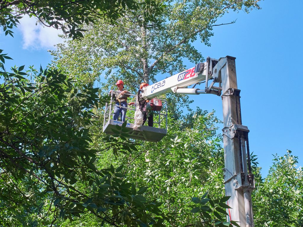 irving-tree-cutting-contractors