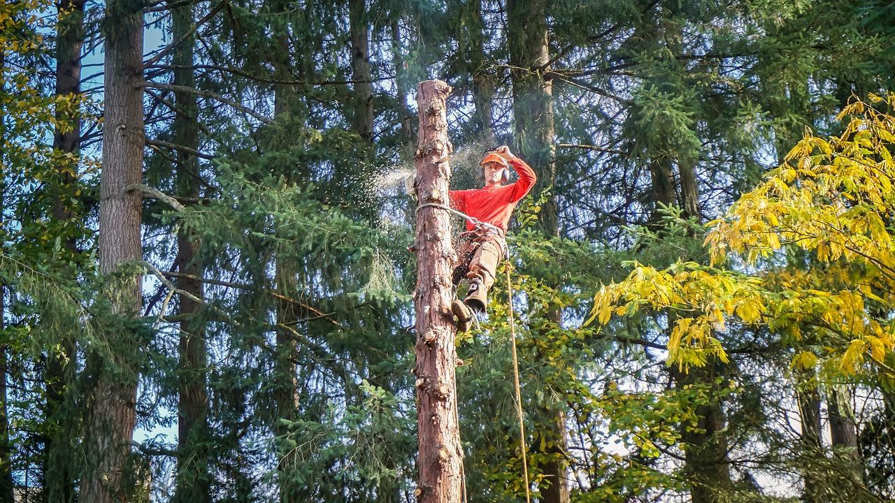 tree-service-irving