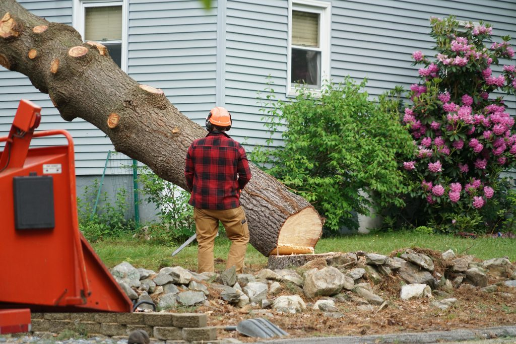 tree-removal-experts-irving